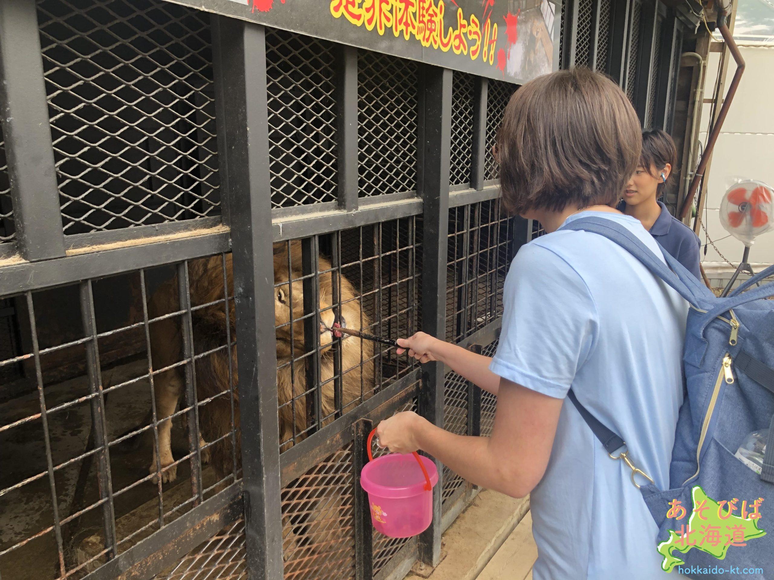 ノースサファリサッポロのライオンの餌やり体験