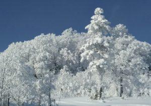 名寄の樹氷