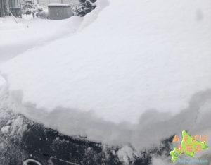 雪が積もった車