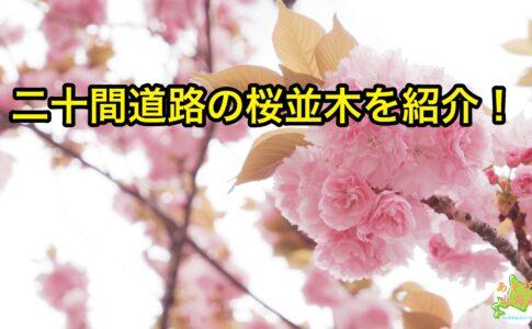 二十間道路桜並木を紹介