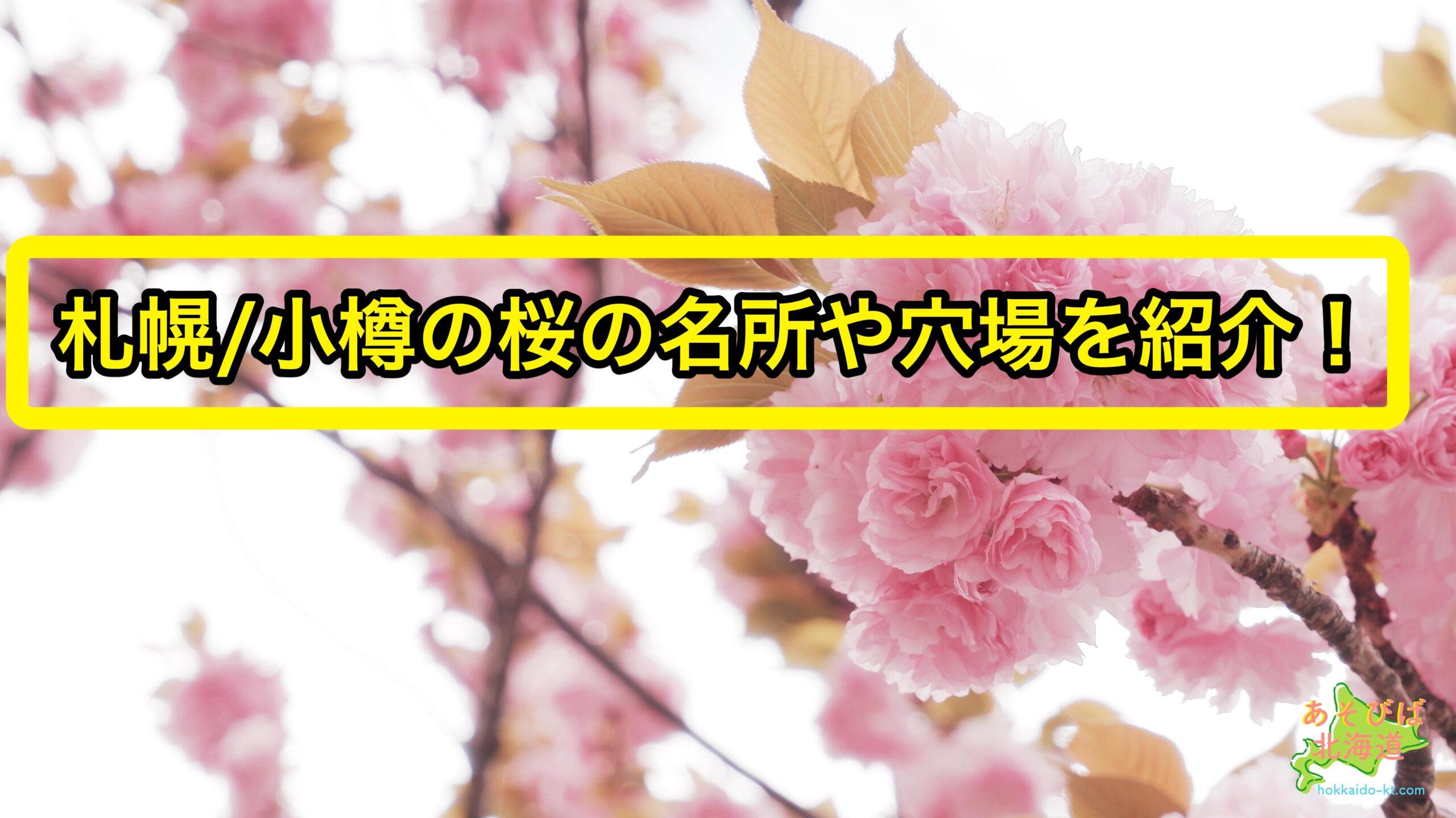 札幌、小樽の桜の名所