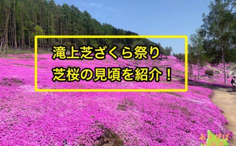 滝上芝ざくら祭りを紹介!