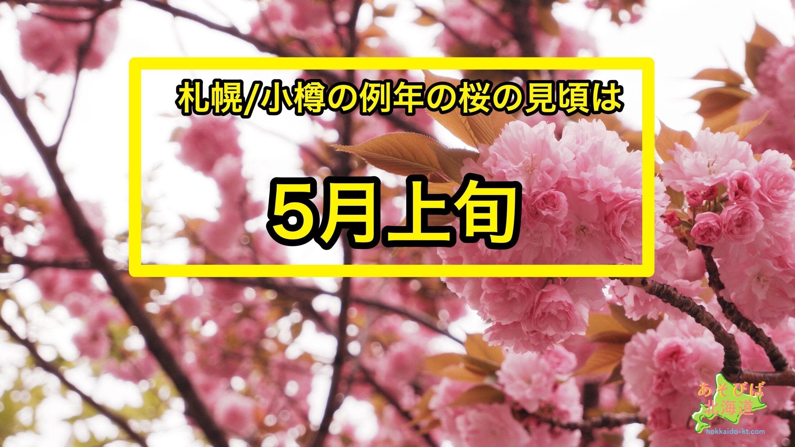 札幌、小樽の例年の桜の見頃は5月上旬