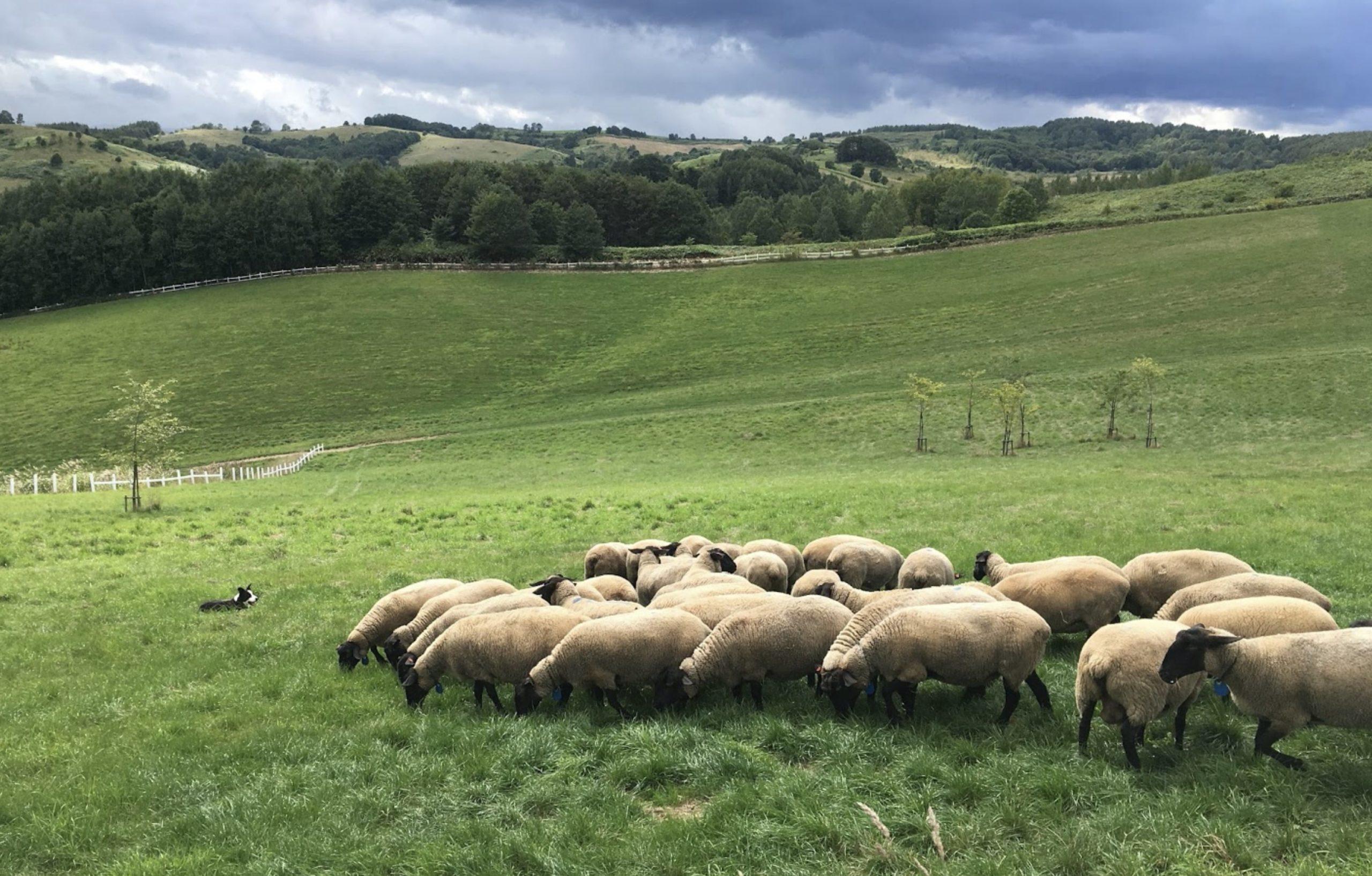 世界のめん羊館