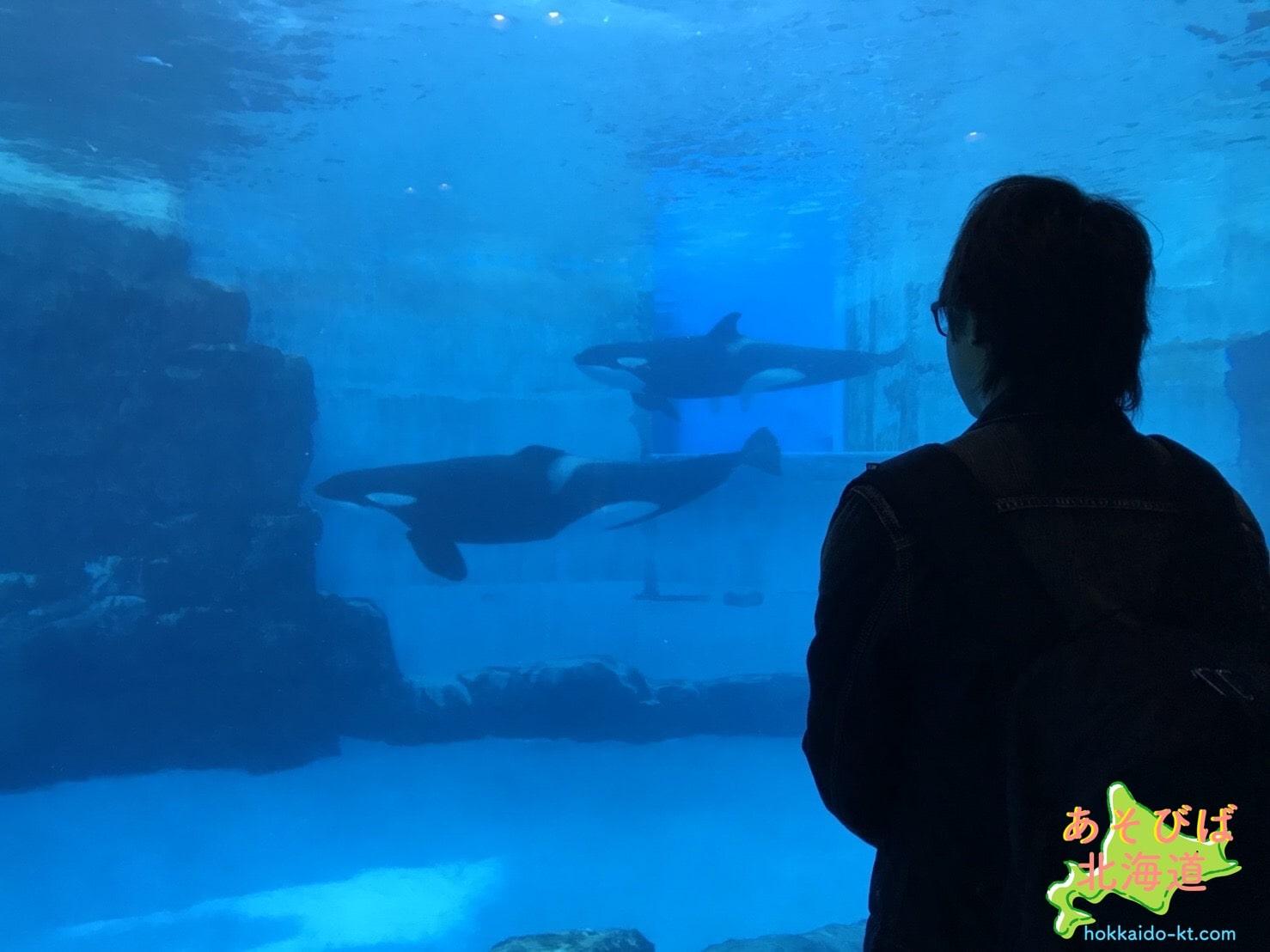 名古屋港水族館のシャチ