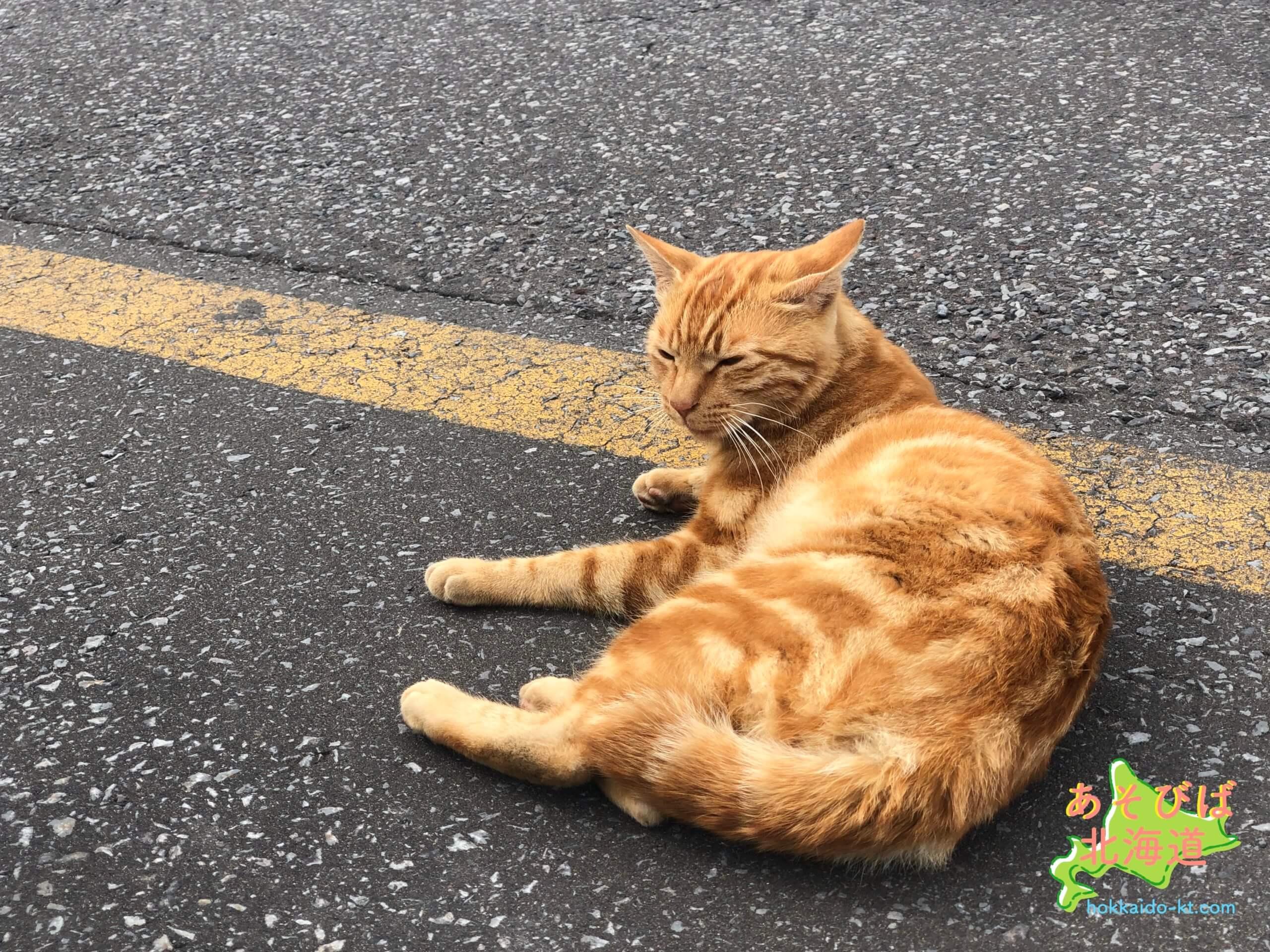 利尻島の野良猫