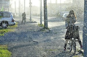 北海道で初雪前に大量発生する雪虫とは?雪虫の正体はなに