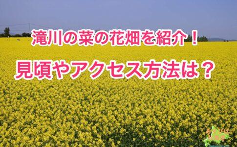 滝川の菜の花畑を紹介