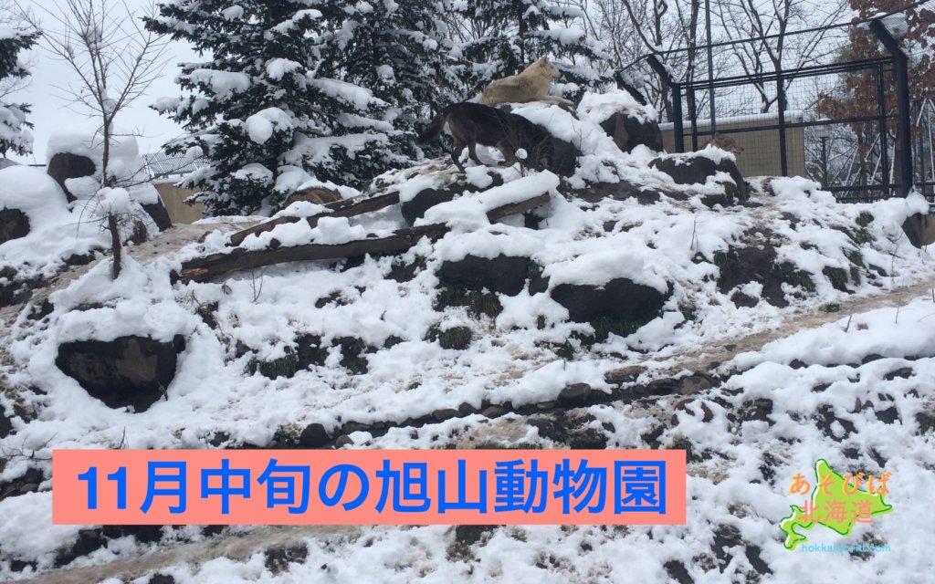 11月中旬の旭山動物園の風景