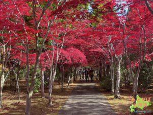平岡樹芸センター紅葉